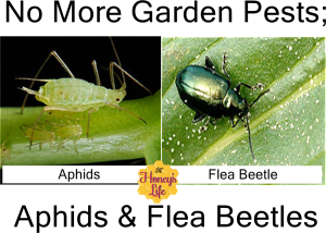 No more garden pests aphids & flea beetles