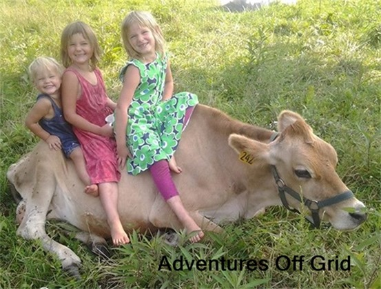 Adventures off grid Interview at HoneysLife.com milk cow