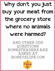 Odd questions I've been asked as a homesteader.  HoneysLife.com